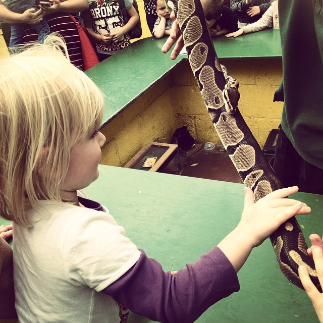 Snake at Butterfly World
