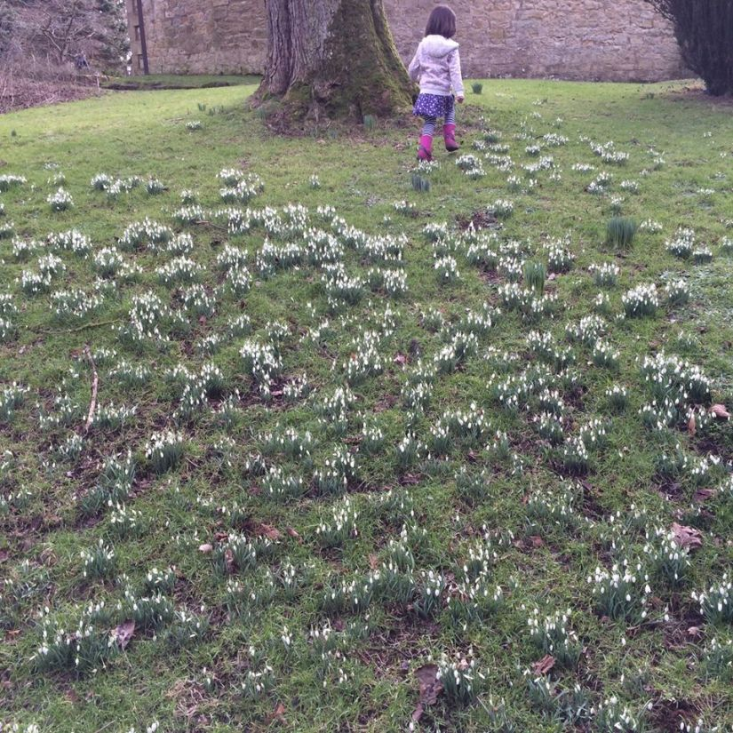 Snowdrops and Evelyn